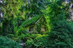 3階建のツリーハウス(カナダ・ブリティッシュコロンビア州)                                                                                                                                                                                 もっと見る