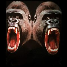 Rrrr... Monkey !