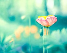flower photography botanical spring wall decor by mylittlepixels