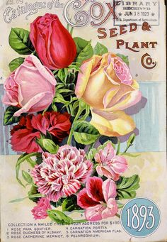 Cox Seed and Plant Company - Seed and plant annual Catalogue - 1893