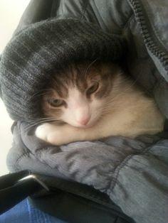 Brrr che freddo!
