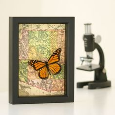 Old map of Arizona with framed Monarch Butterfly by BugUnderGlass, $45.00