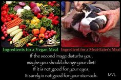 Veganism, animal rights...