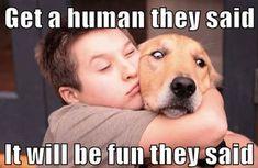 Dog Quotes Funny, Funny Animal Memes, Animal Quotes, Funny Animal Pictures, Dog Pictures, Funny Dogs, Funny Animals, Funny Memes, Sarcasm Quotes