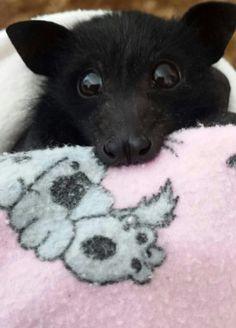 #cute #baby #orphaned #bat