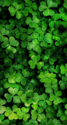 Find images and videos about green, wallpaper and clover on We Heart It - the app to get lost in what you love. Lucky Wallpaper, Iphone Wallpaper Green, Iphone Background Wallpaper, Cellphone Wallpaper, Phone Backgrounds, Scenery Wallpaper, Flower Wallpaper, Nature Wallpaper, Pattern Wallpaper