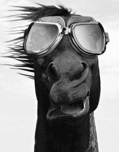 Horse with goggles! What a funny face!