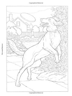 Dogs To Paint Or Color Dover Art Coloring Book John Green 9780486465418