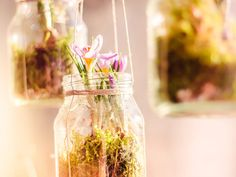Der Lenz ist da! Wenn das kein guter Grund ist, sich die Wohnung mit ein paar Frühlingsboten zu verschönern. Renate von Titatoni zeigt Dir wie Du innerhalb von 5 Minuten diese schicken, hängenden Frühlingspflanzen in Dein Heim einziehen lassen kannst.