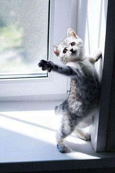 Drama cat, also called Stella :)