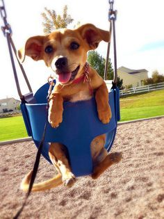 Baby puppy in a swing why so cute