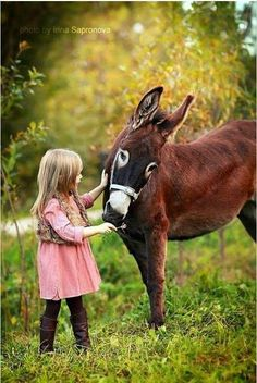 A little girl and her gentle donkey