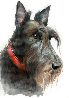 "Get wonderful tips on ""boston terrier puppies"". They are offered for you on our website. Scottish Terrier Puppy, Terrier Puppies, Boston Terrier, Pet Remembrance, Dog Eyes, West Highland Terrier, Dog Paintings, Grafik Design, Dog Portraits"
