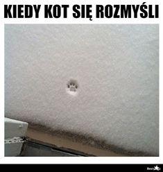 BESTY.pl Funny Lyrics, Wtf Funny, Haha, Beautiful Pictures, Memes, Sweets, Animal, Random, Humor