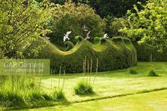 wave topiary hedge, boxwood, (research for our mature yew hedge)