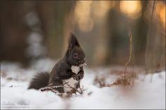 ~ winter in vienna ~
