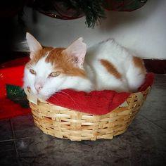 recostado..en la mini cesta..#apretado