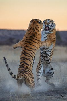 earth-song: little fight by Marion Vollborn