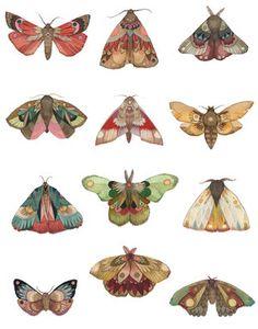 Printing up a fresh batch of moth prints today! All 12 days on one print -. - Carola : Printing up a fresh batch of moth prints today! All 12 days on one print -. Sketches, Art Inspo, Illustration, Botanical Illustration, Drawings, Art Projects, Art Inspiration, Prints, Moth Print