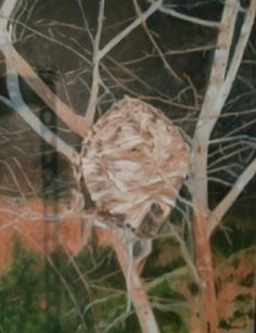 "Hornet's Nest. Oil on Canvas 24"" X 30"" Price - $575, or best offer."