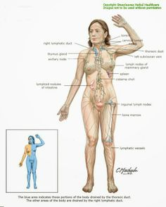 7 best lymphatic images on pinterest lymphatic system anatomy and diagrams lymphatic system ccuart Images