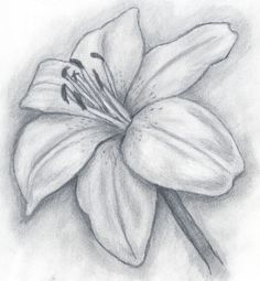Browse Lily+pencil+drawing pictures, photos, images, GIFs, and videos on Photobucket Pencil Drawing Pictures, Pencil Drawings Of Flowers, Pencil Drawing Tutorials, Art Drawings Sketches Simple, Flower Sketches, Pencil Art Drawings, Pictures To Draw, Drawing Flowers, Realistic Flower Drawing