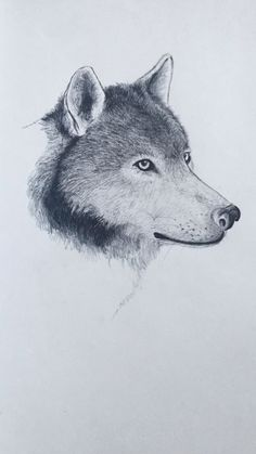Puppy Drawing Easy, Wolf Drawing Easy, Coyote Drawing, Husky Drawing, Deer Drawing, Drawing Art, Animal Sketches, Art Drawings Sketches, Horse Drawings