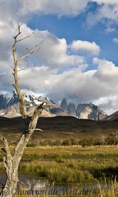 Wildnis, Wind und weidende Guanakos: Patagoniens Nationalpark rund um das Torres del Paine Gebirge in 72 atemberaubenden Bildern!