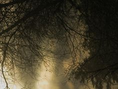 d'ombres et de lumières ...ivresse hivernale