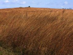 Hiking and camping destinations in iowa
