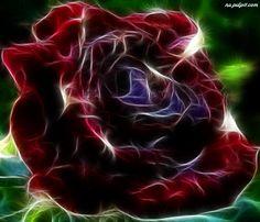 Czerwona, Róża, Kwiat, Fraktal