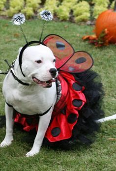 Halloween Photo Contest: Codee