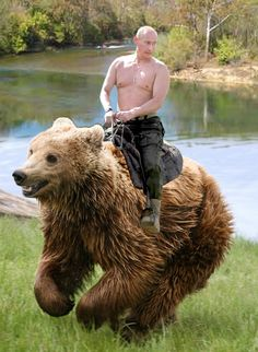 vladimir putin on a bear not a horse