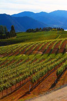 Travel Inspiration | Benson Vineyards on Lake Chelan, Washington State