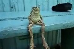 FROG HAVING RELAX - Yahoo Image Search results