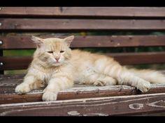 【衝撃】 猫のしょんぼり画像16連発!困り顔をするかわいいニャンコたち