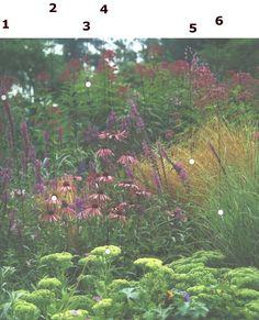 1 Lythrum salicaria 2 Echinacea purpurea 3 Eupatorium maculatum `Atropurpureum´ 4 Sedum spectabile 5. Deschampsia cespitosa 6. Panicum virgatum