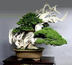 master bonsai