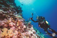 Unterwasserfotografie Tipps Tricks Einsteiger