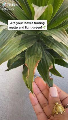 House Plants Decor, Plant Decor, Planting Succulents, Planting Flowers, Household Plants, Inside Plants, Plant Aesthetic, Plant Guide, House Plant Care