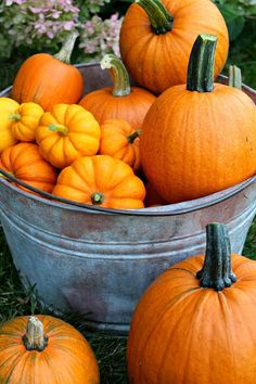 Visiting a pumpkin patch is always a fun outing. It's even more fun when the pumpkin patch is in your very own backyard! Autumn Day, Autumn Leaves, Pumkin Decoration, Planting Pumpkins, Pumpkin Farm, Pumpkin Plants, Pumpkin Field, Pumpkin Spice, Autumn Scenes