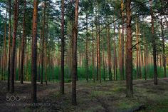 Forest by alexandrborisov1 #nature #mothernature #travel #traveling #vacation #visiting #trip #holiday #tourism #tourist #photooftheday #amazing #picoftheday