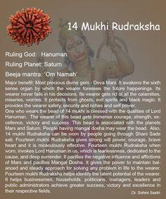 14 Mukhi Rudraksha..