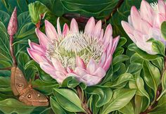 Marianne North, #Kew Gardens - Not one Flower, but many in one, Van Staaden's Kloof. © The Trustees of the Royal Botanic Gardens, Kew