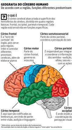 Neurocientista mostra em livro por que cérebro ainda é uma incógnita - diseños de interiores - Medicine Notes, Medicine Student, Student Studying, Student Life, Brain Based Learning, Study Organization, Medical Anatomy, Study Planner, Medical Students