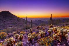 5 Reasons To Honeymoon in Scottsdale, Arizona