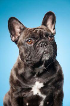 Spennende og annerledes bilde av hunden din. Med farger kan vi skape kontrast eller harmoni og tilpasse uttrykket til din hund. Hundefotograf i Sarpsborg