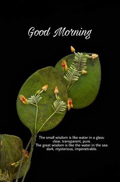 Good Morning Friends Quotes, Good Morning Beautiful Quotes, Good Morning Prayer, Cute Good Morning, Good Morning Inspirational Quotes, Morning Greetings Quotes, Good Morning Messages, Morning Prayers, Good Morning Wishes