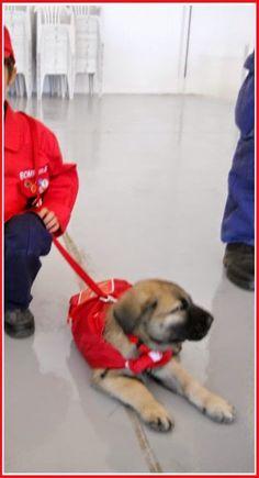 O Palhetas na Foz: Por causa de um cão: Bombeiros Voluntários e Munic...