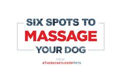 6 Spots to Massage Your Dog! Do Love, Stress And Anxiety, Your Dog, Massage, Lifestyle, Dogs, Image, Pet Dogs, Doggies